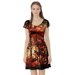 Forest Trees Abstract Short Sleeve Skater Dress