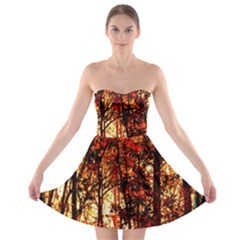 Forest Trees Abstract Strapless Bra Top Dress