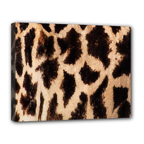 Yellow And Brown Spots On Giraffe Skin Texture Canvas 14  X 11