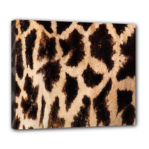 Yellow And Brown Spots On Giraffe Skin Texture Deluxe Canvas 24  X 20