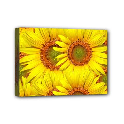 Sunflowers Background Wallpaper Pattern Mini Canvas 7  x 5