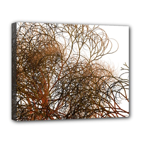 Digitally Painted Colourful Winter Branches Illustration Deluxe Canvas 20  x 16