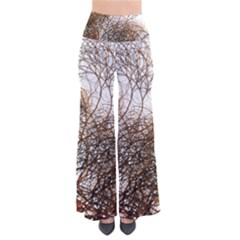Digitally Painted Colourful Winter Branches Illustration Pants