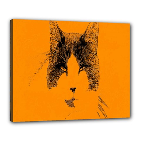 Cat Graphic Art Canvas 20  x 16