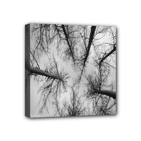 Trees Without Leaves Mini Canvas 4  x 4