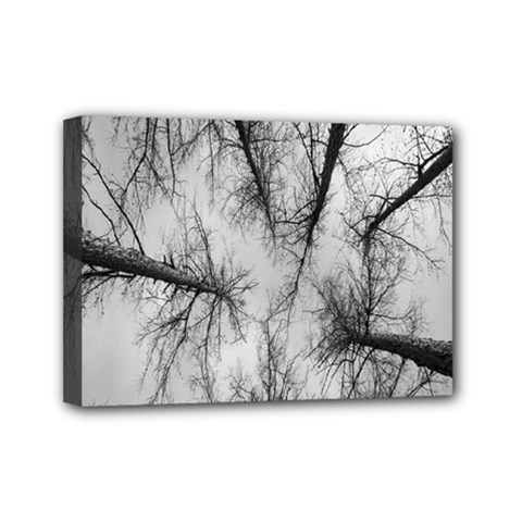 Trees Without Leaves Mini Canvas 7  X 5