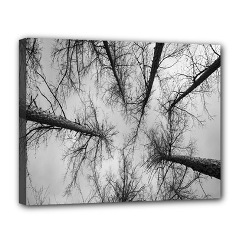 Trees Without Leaves Canvas 14  x 11