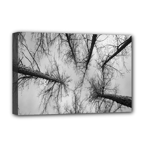 Trees Without Leaves Deluxe Canvas 18  X 12