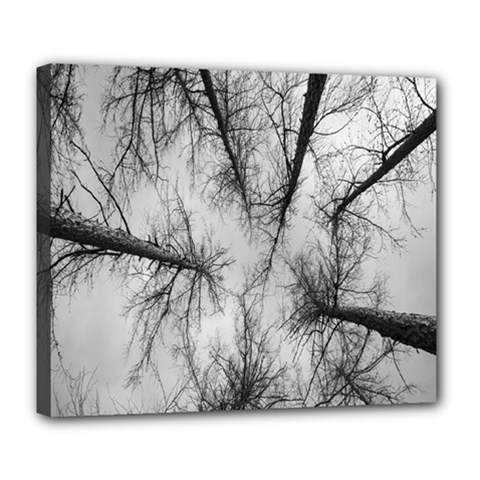 Trees Without Leaves Deluxe Canvas 24  x 20