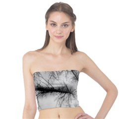 Trees Without Leaves Tube Top