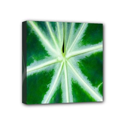 Green Leaf Macro Detail Mini Canvas 4  X 4
