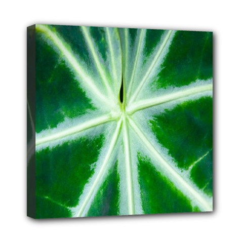 Green Leaf Macro Detail Mini Canvas 8  X 8