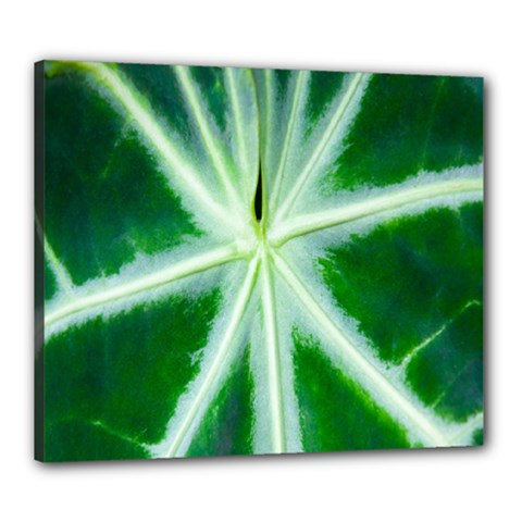 Green Leaf Macro Detail Canvas 24  x 20