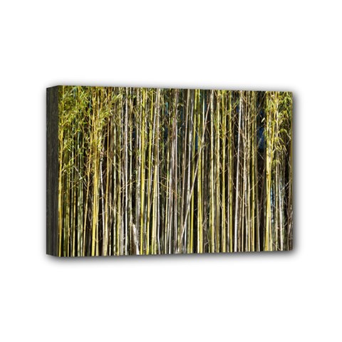 Bamboo Trees Background Mini Canvas 6  X 4