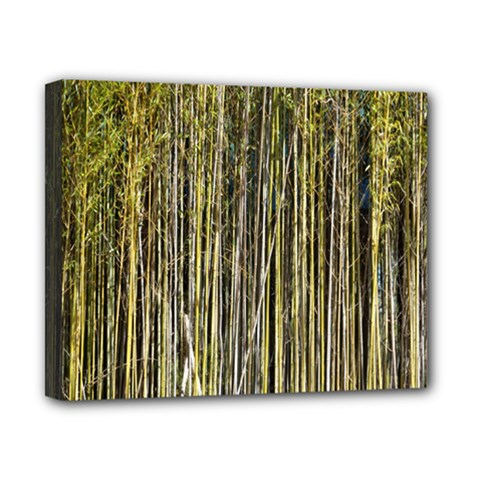 Bamboo Trees Background Canvas 10  x 8