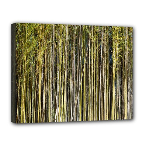 Bamboo Trees Background Canvas 14  x 11