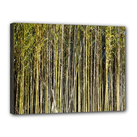 Bamboo Trees Background Canvas 16  x 12