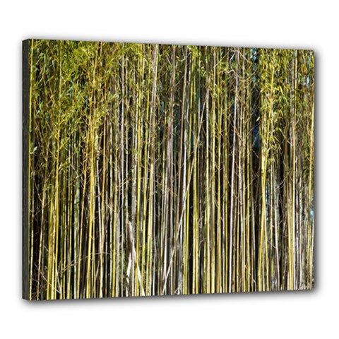 Bamboo Trees Background Canvas 24  x 20