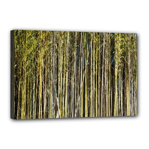 Bamboo Trees Background Canvas 18  x 12