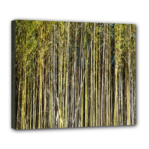 Bamboo Trees Background Deluxe Canvas 24  X 20