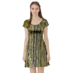 Bamboo Trees Background Short Sleeve Skater Dress