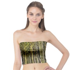 Bamboo Trees Background Tube Top