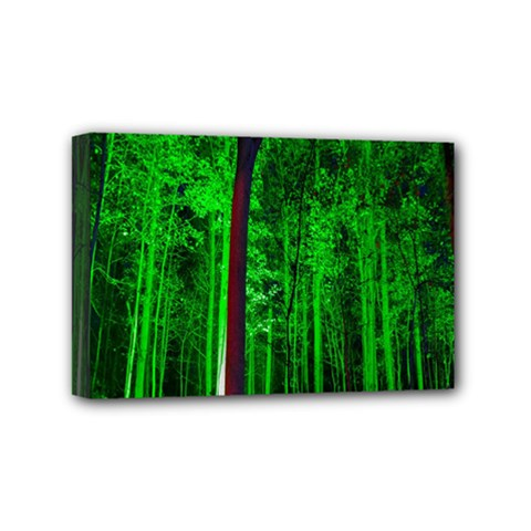 Spooky Forest With Illuminated Trees Mini Canvas 6  X 4