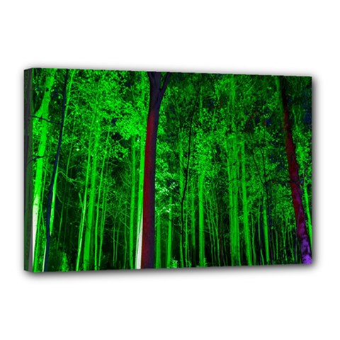Spooky Forest With Illuminated Trees Canvas 18  x 12