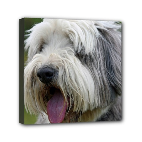 Bearded Collie Mini Canvas 6  x 6