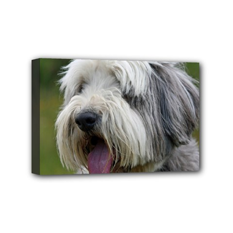 Bearded Collie Mini Canvas 6  x 4