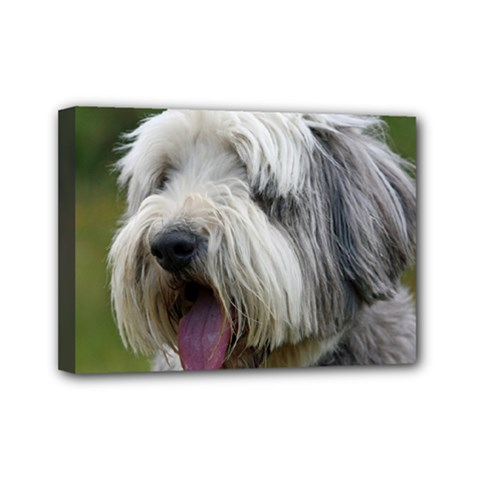 Bearded Collie Mini Canvas 7  x 5