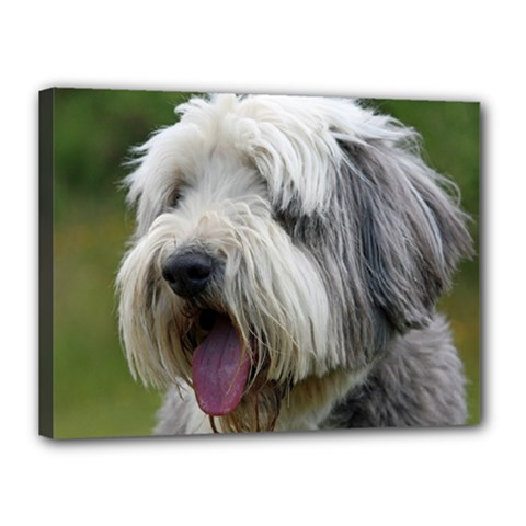 Bearded Collie Canvas 16  x 12