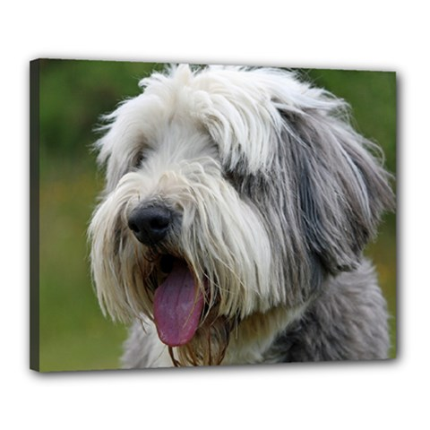 Bearded Collie Canvas 20  x 16