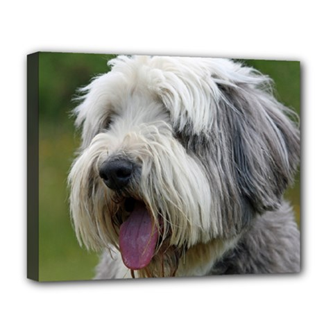 Bearded Collie Deluxe Canvas 20  x 16