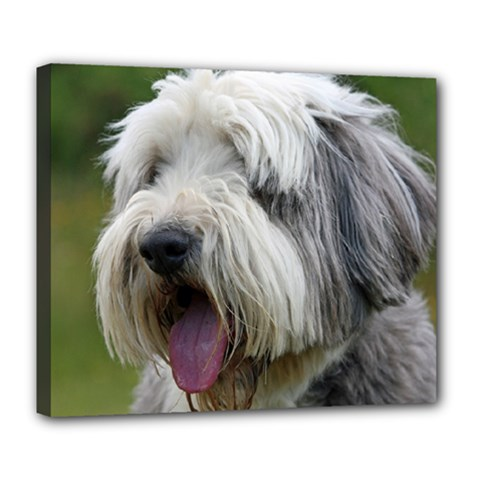 Bearded Collie Deluxe Canvas 24  x 20