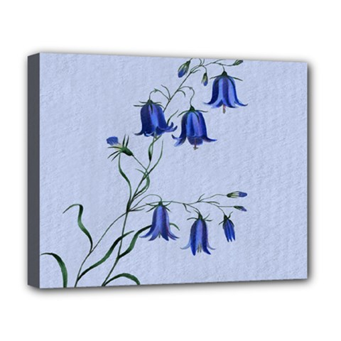 Floral Blue Bluebell Flowers Watercolor Painting Deluxe Canvas 20  x 16