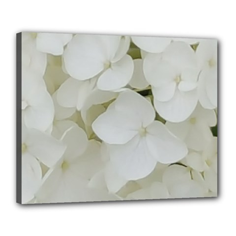 Hydrangea Flowers Blossom White Floral Photography Elegant Bridal Chic  Canvas 20  x 16