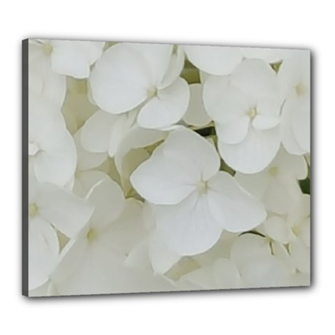 Hydrangea Flowers Blossom White Floral Photography Elegant Bridal Chic  Canvas 24  x 20