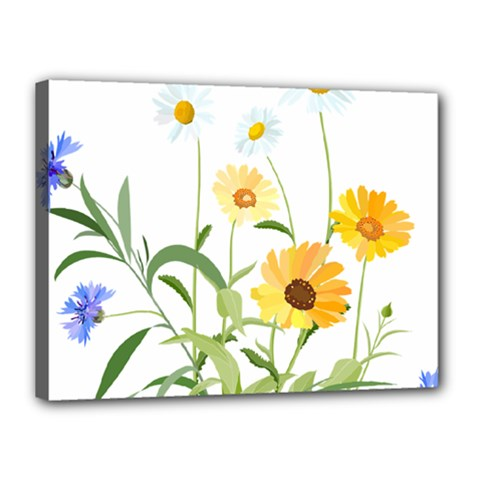 Flowers Flower Of The Field Canvas 16  X 12