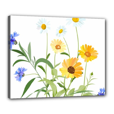 Flowers Flower Of The Field Canvas 20  X 16