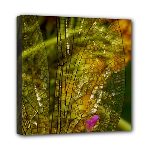 Dragonfly Dragonfly Wing Insect Mini Canvas 8  X 8