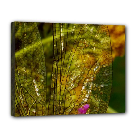 Dragonfly Dragonfly Wing Insect Canvas 14  X 11