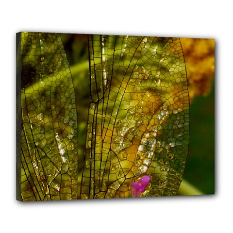 Dragonfly Dragonfly Wing Insect Canvas 20  x 16