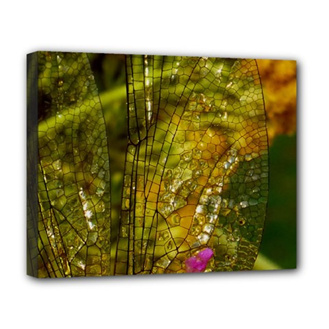 Dragonfly Dragonfly Wing Insect Deluxe Canvas 20  X 16