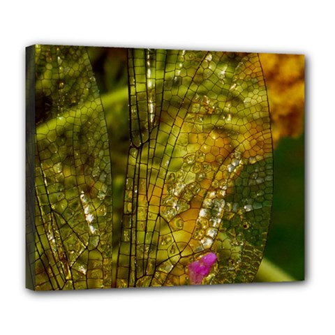 Dragonfly Dragonfly Wing Insect Deluxe Canvas 24  x 20