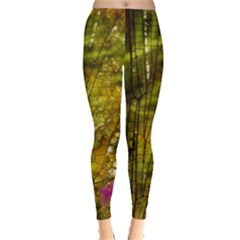 Dragonfly Dragonfly Wing Insect Leggings