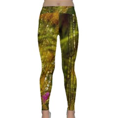 Dragonfly Dragonfly Wing Insect Classic Yoga Leggings