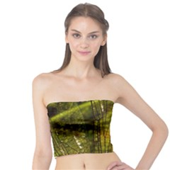 Dragonfly Dragonfly Wing Insect Tube Top