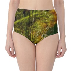 Dragonfly Dragonfly Wing Insect High-Waist Bikini Bottoms