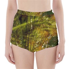 Dragonfly Dragonfly Wing Insect High Waisted Bikini Bottoms